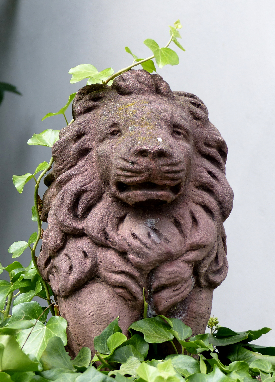 Schöner Löwe